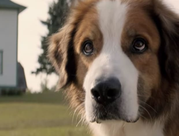 A Dog's Purpose lacks purpose and plotline